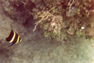 An den Riffen ringsum gibt es viel zu sehen